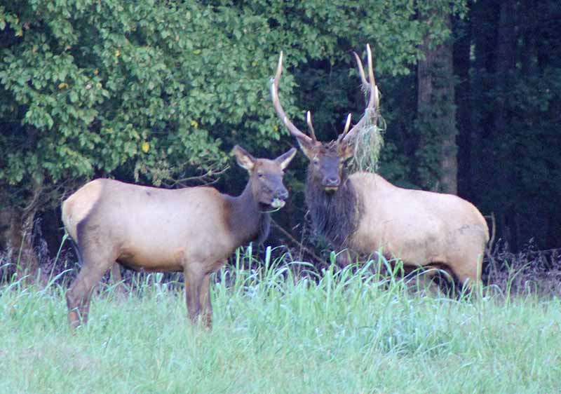 Area Events - Elk